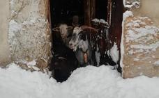 La nieve deja incomunicados a decenas de pueblos leoneses