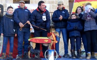 Pelaya de Safesa, campeona de España de Galgos