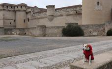 Pipper, el primer perro 'influencer' de España, visita Cuéllar