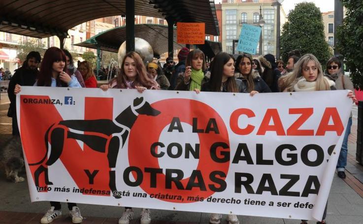 Animalistas exigen Valladolid la prohibición de la caza con perro