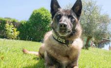 Honores para Elton, el perro de la Guardia Civil que buscó a Diana Quer y Gabriel Cruz