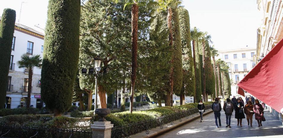 El tejido urbano de Salamanca se oxigena con 80.000 árboles y 435 zonas verdes