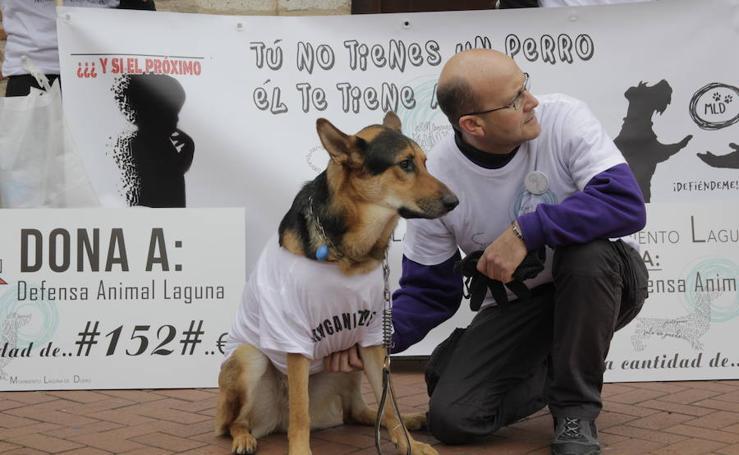 Laguna protesta contra el envenenamiento de perros