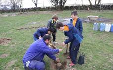 La Diputación entregará 1.764 árboles a los municipios de Segovia