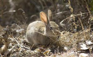 Vallas contra la entrada de conejos en las líneas de Alta Velocidad