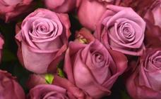 Rosas para enamorar a medio mundo en San Valentín