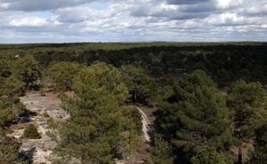 Cuéllar recauda el 40% más de lo previsto en la subasta de las maderas de sus montes