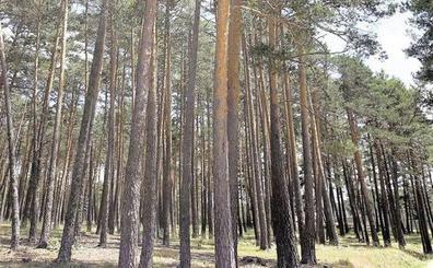 Cesefor coorganiza la sexta Semana Forestal Mediterránea que se celebrará el próximo mes de abril en Líbano