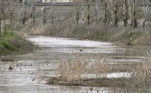 El Zapardiel recupera su cauce en un tramo de cuatro kilómetros entre Lomoviejo y Tordesillas