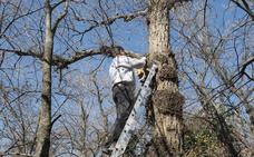 Nidos con maderas reutilizadas para pájaros vallisoletanos