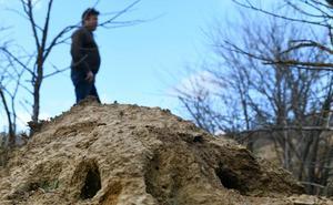 Los daños causados por los conejos en los cultivos de Castilla y León superan el millón de euros