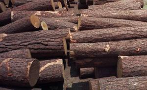 La Junta recaudará más de 2 millones de euros para ayuntamientos de Zamora con la venta de madera