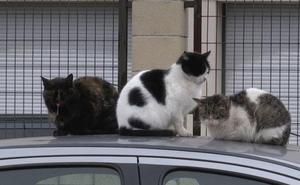 El Ayuntamiento de Lastrilla prohíbe dar comida a los gatos callejeros bajo advertencia de sanción
