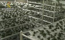 Importante golpe de la Guardia Civil contra el cultivo de marihuana en Burgos