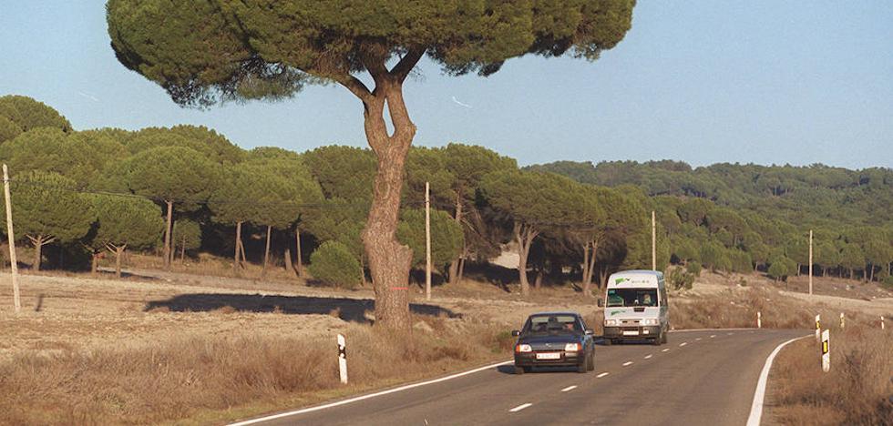 Un árbol más ancho que alto con dos siglos de vida