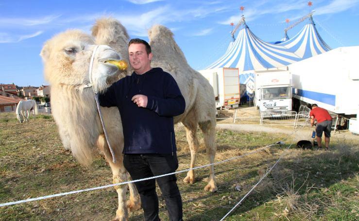Animales del Circo Quirós