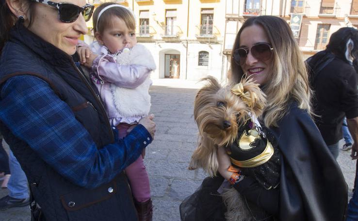 Concurso de disfraces de mascotas en el Carnaval de Toro