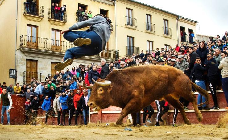 Jornada del martes en el Carnaval del Toro de Ciudad Rodrigo (Salamanca)