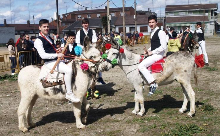 Carrera de cintas en burro de los quintos en los carnavales de Pedrajas de San Esteban