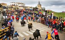 Broche de oro al carnaval de Ciudad Rodrigo con los bravos toros de Talavante