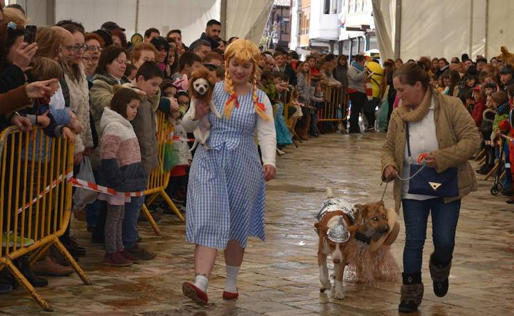 Las mascotas de Aguilar también viven el Carnaval