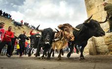 El concejal de Festejos de Ciudad Rodrigo dice que este carnaval «es el que buscaba»