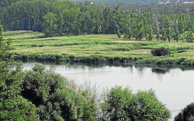 Un fondo de 7,2 millones modernizará 391 hectáreas de regadío en Castronuño