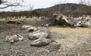 Roban cuatro cisnes y 34 patos en los parques de Saldaña y Herrera