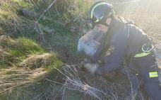 Los bomberos de la provincia de Valladolid rescatan a un tejón en Moral de la Reina