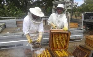 La miel adulterada clava el aguijón a los 691 apicultores palentinos