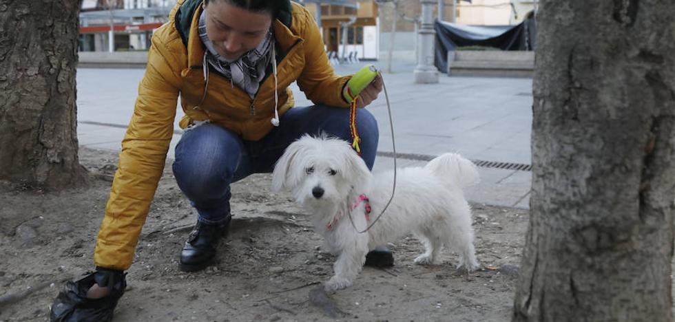 No recoger las heces de perro en Palencia acarrea una sanción de entre 30 y 150 euros
