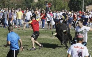 El Supremo cierra la última vía para volver al tradicional Toro de la Vega