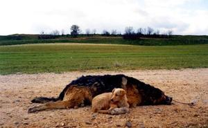 Detenido por matar tres perros con veneno y tener cepos de caza y mechas