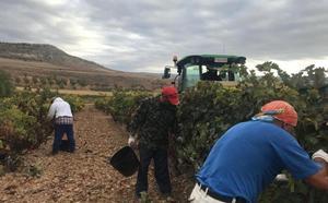 La Fiscalía de Valladolid manda al juzgado la denuncia de Alejandro Fernández contra Pesquera por la vendimia «a la fuerza» de sus viñas