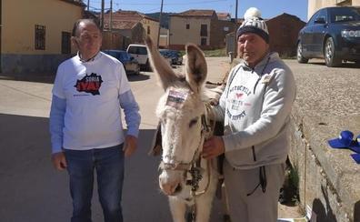 El alcalde de Torrubia y la burra Margarita inician su peculiar protesta por la España Vaciada
