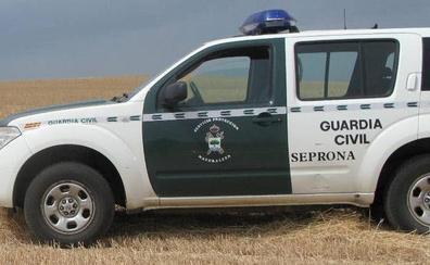 La Guardia Civil de Valladolid denuncia una marcha caballista no autorizada entre Valdestillas y Viana