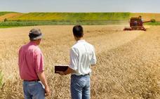 Condenada a un año una empresa por la venta ilegal de semilla de cereal en Valladolid
