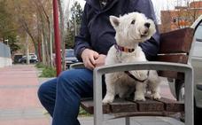 Un juez de Valladolid fija la custodia compartida de un perro tras una separación de pareja