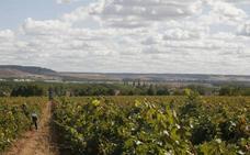 Europa da la razón a una empresa vallisoletana frente a otra riojana por la marca de un vino
