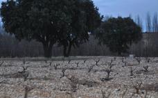 González Byass compra la bodega Fournier de Ribera de Duero