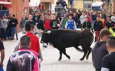 La Asociación Taurina de Pedrajas programa sendos festejos para el 20 y 21 de abril