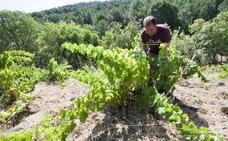 La Comisión Europea reconoce Cebreros como Denomianción de Origen Protegida