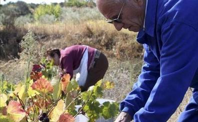 Los vinos de Arribes incluirán las variedades de uva Bruñal y Syrah en su denominación de origen