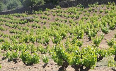 Europa reconoce la Denominación de Origen Protegida de los vinos de Cebreros