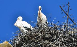 La Junta y la Guardia Civil investigan el envenenamiento de 14 aves en Soria