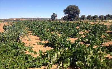 Vinos de la Sierra de la Culebra impulsa esta comarca vitivinícola con el primer Día de la Bodega