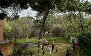 Alumnos de tres años alegan al PGOU para proteger un árbol en Valladolid
