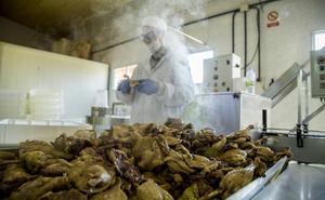 El pato, un producto gourmet 'made in Palencia'