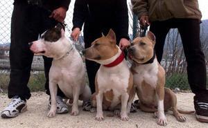 Tener perros peligrosos sin licencia se sancionará hasta con 3.000 euros en Cuéllar