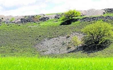 Piñel de Abajo y Viloria, a la vanguardia en Castilla y León en el cultivo de la trufa